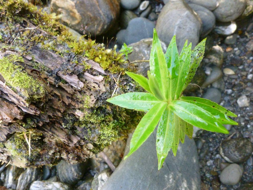 Plant New Zealand