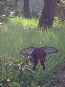 Butterfly Daejin University
