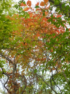 Fall leaves at Halla Ecoforest
