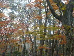 Fall on Seongpanak