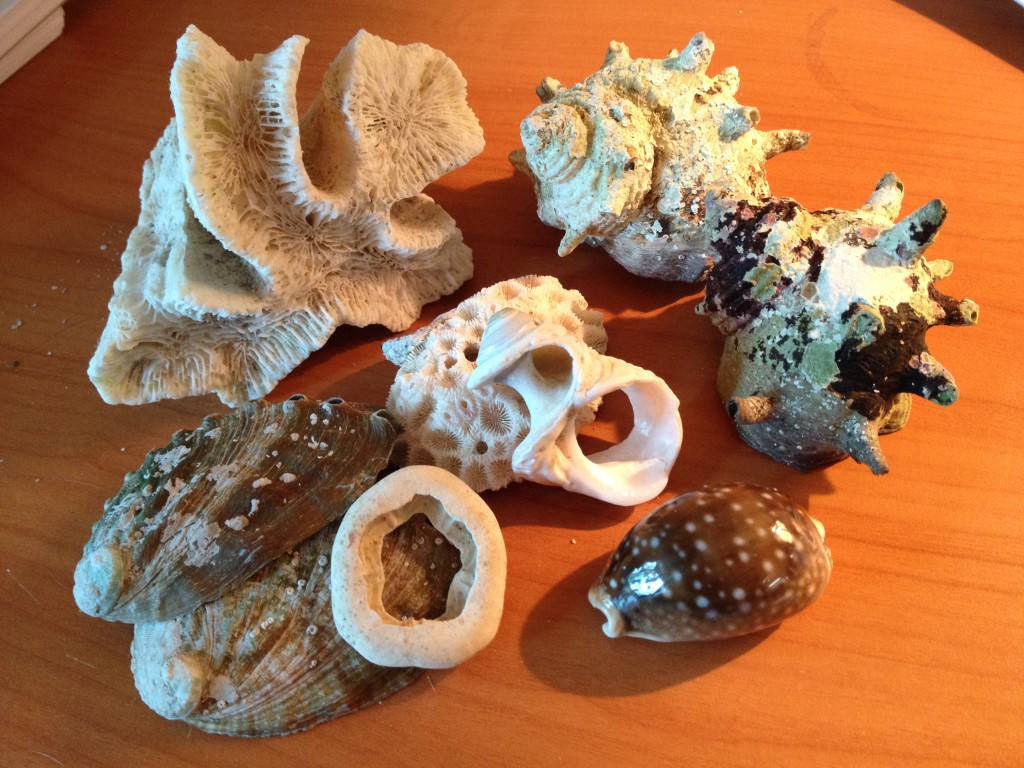 Seashells as memories